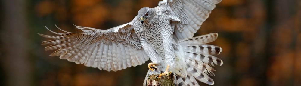 Oregon Falconers Association